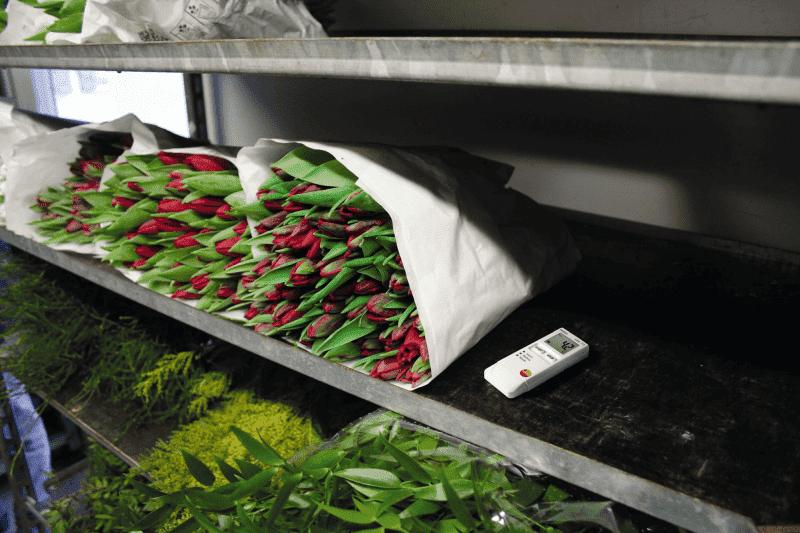 Monitorowanie i dokumentowanie temperatury i wilgotności w transporcie kwiatów